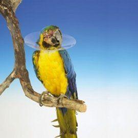 Vogelkragen - Halskragen für Vögel