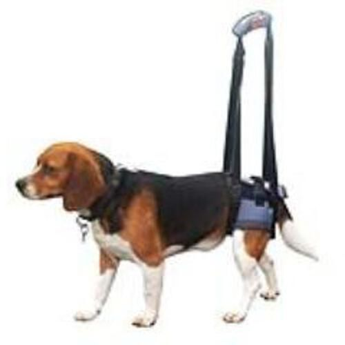 Gehilfe Handy Canis