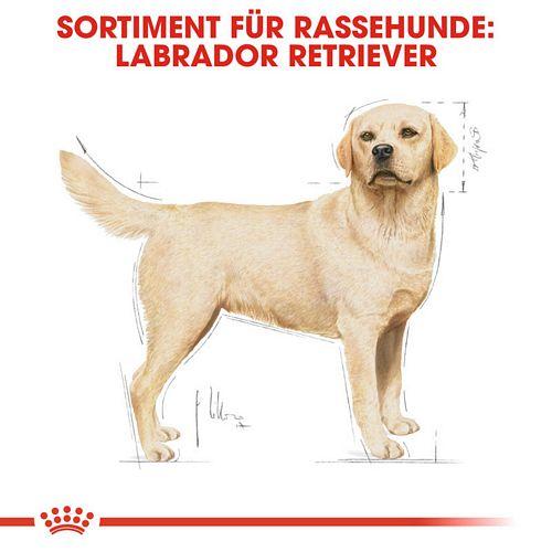 Royal Canin Labrador Retriever Adult Hundefutter