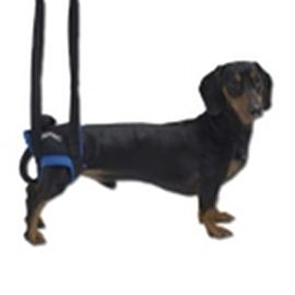 Gehhilfe für Hunde hinten