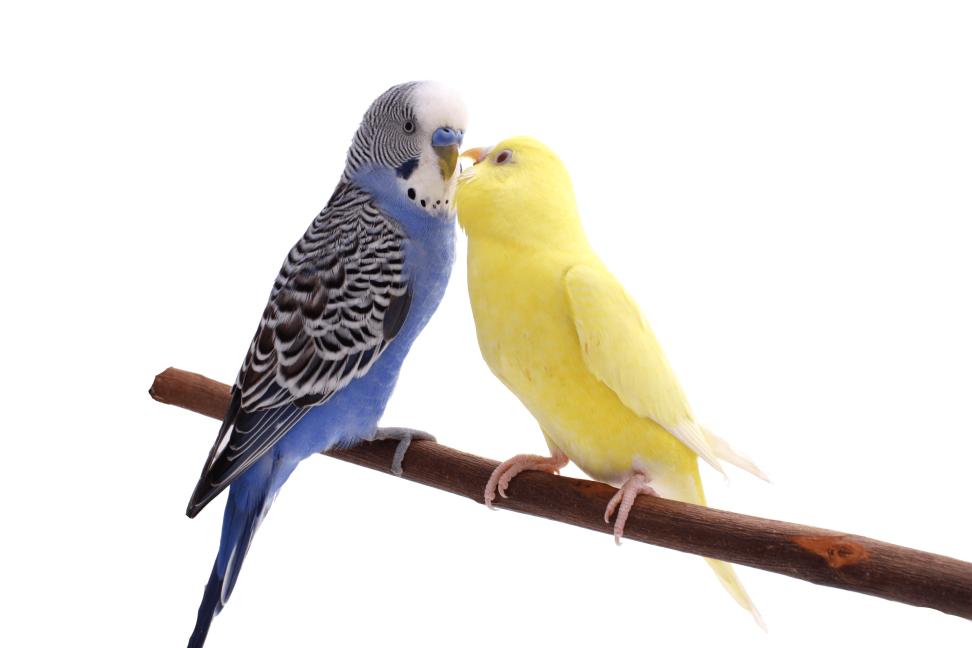 Vogelgesundheit