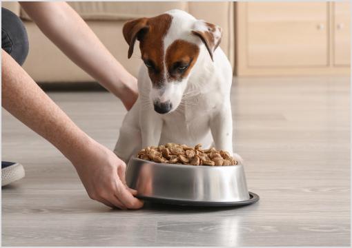 Diätfutter Hund