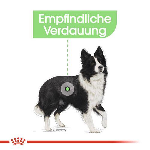 Royal Canin DIGESTIVE CARE MEDIUM Trockenfutter für mittelgroße Hunde mit empfindlicher Verdauung