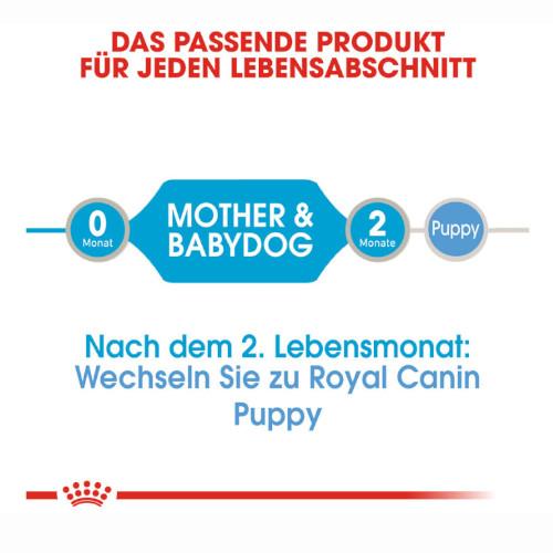 Royal Canin Starter Mousse Mother & Babydog Welpenfutter nass für tragende Hündinnen und Welpen