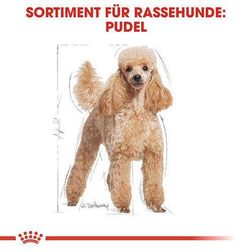 Royal Canin Poodle Adult in Soße Hundefutter nass für Pudel