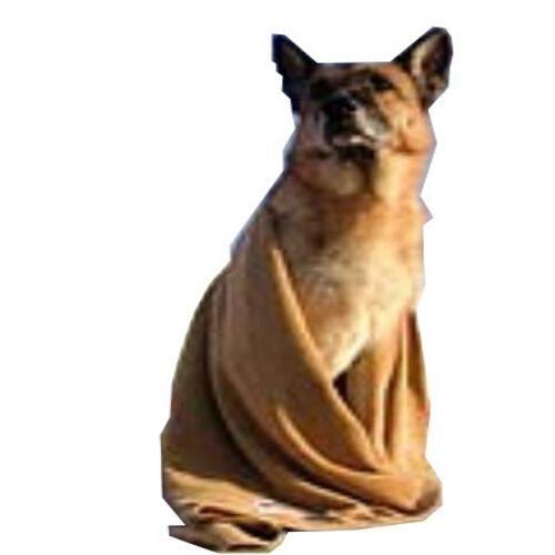 Dog Towel Clean & Dry