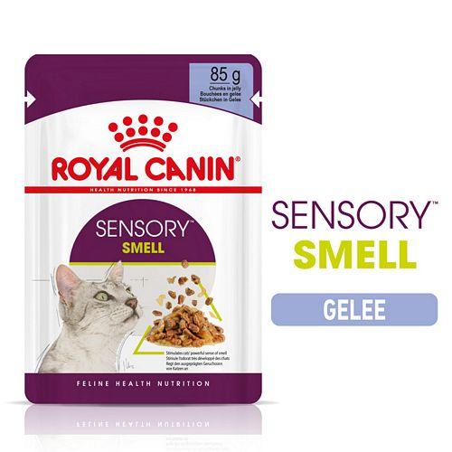 Royal Canin SENSORY Smell Nassfutter in Gelee für wählerische Katzen 12 x 85 g