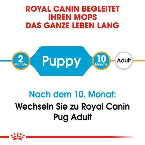 Royal Canin Pug Puppy Welpenfutter trocken für Mops