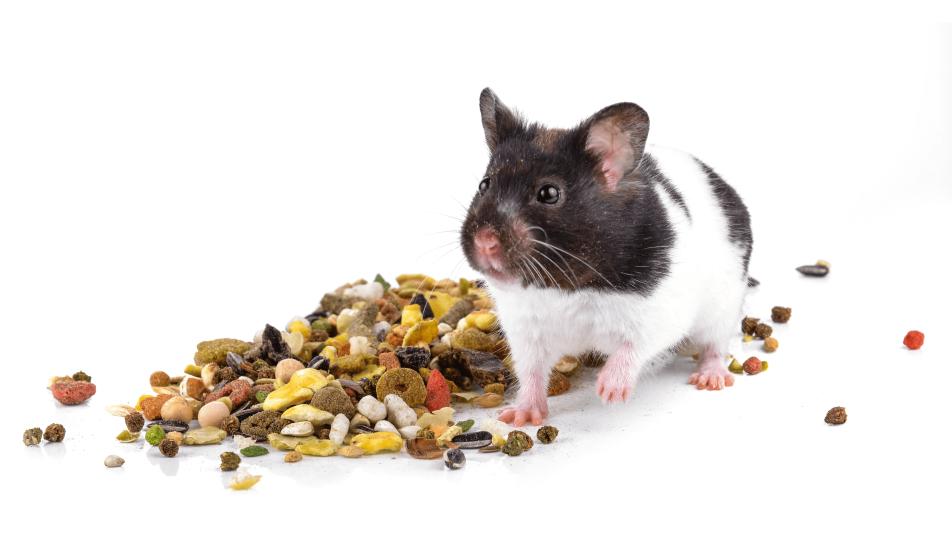 Alleinfuttermittel für Heimtiere