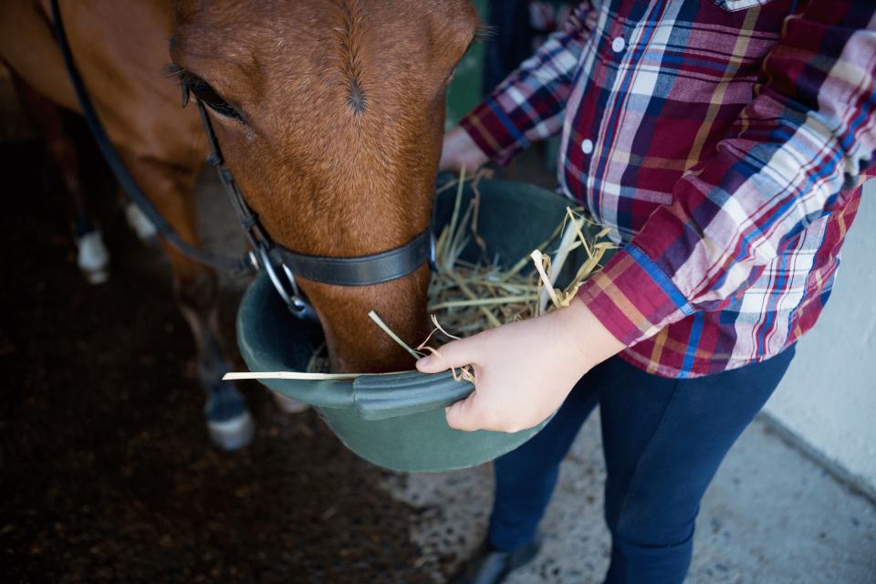 Pferdemüsli Futtermittel